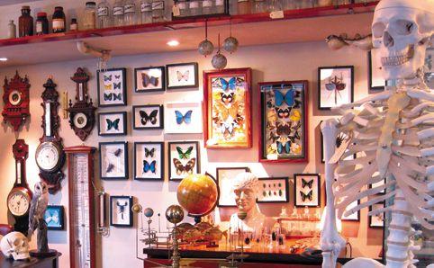 Wunderkammer -  Celebrating the weird and wacky, Wunderkammer sells an array of scientific paraphernalia...