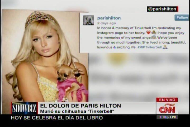 Muere La Chiguagua De París Hilton #Video