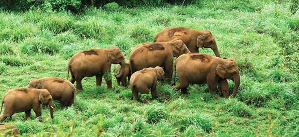 Most Kerala tour packages include wildlife tour and adventure activities in the forest