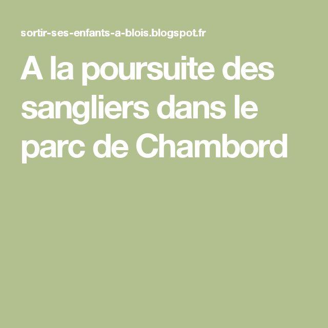 A la poursuite des sangliers dans le parc de Chambord