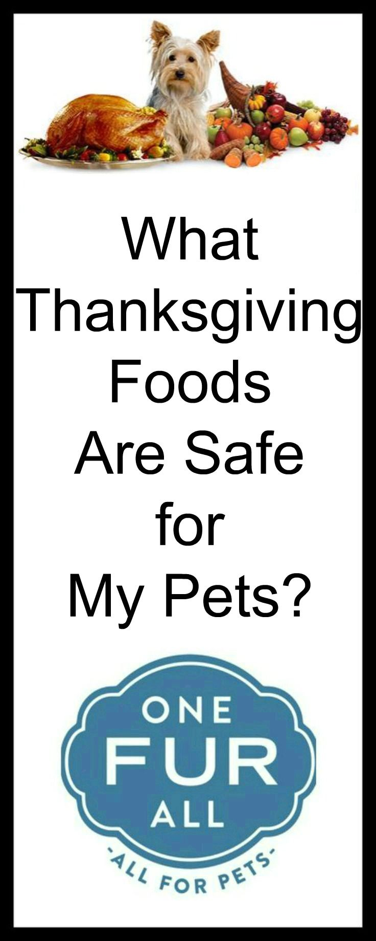 Thanksgiving offers you and your family members a chance to enjoy a delicious homemade feast, but what about your pets? #pets #food
