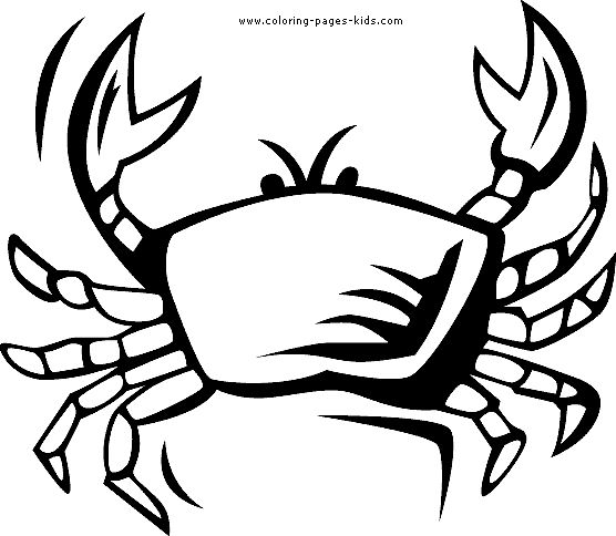 ocean animals coloring pages for adults 117 best preschool coloring sheets images on pinterest