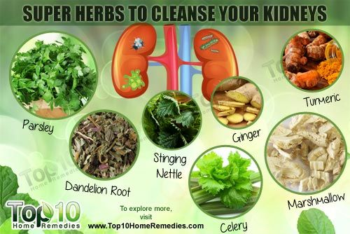 Top 10 Super Herbs to Cleanse Your Kidneys   Heal Thy Self