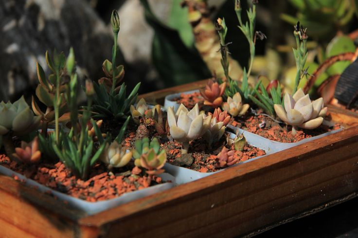 Succulent Growing in a Pot by Charissa Lotter (de Scande)