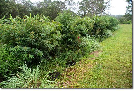 Swales - lemongrass in the ditch, fruit trees on the mound, nitrogen fixers between fruit trees.