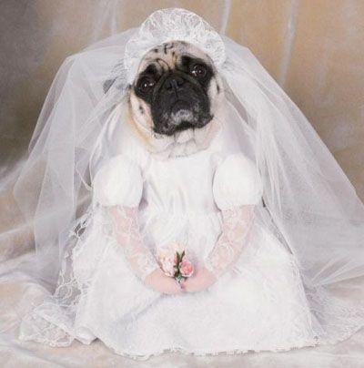 les 25 meilleures id es concernant costume de mariage de chien sur pinterest instants de. Black Bedroom Furniture Sets. Home Design Ideas