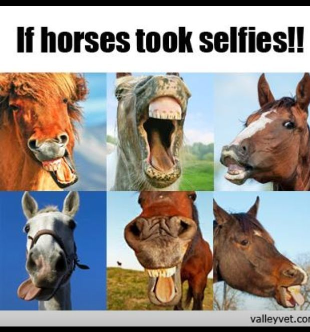 Horses are much more funny than cats - Funny horse videos ... |Youtube Pets Funny Horses