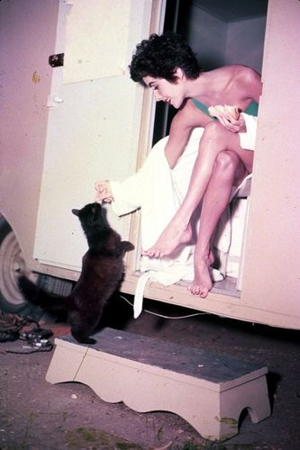 Another one of the many, many pics of Liz Taylor with her cats