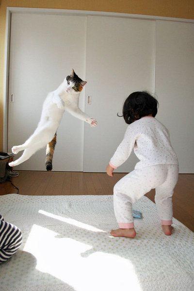Cat  Flying「何でやねん!」する猫