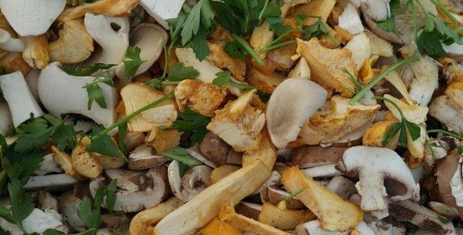 Scrambled eggs with fresh forest mushroom