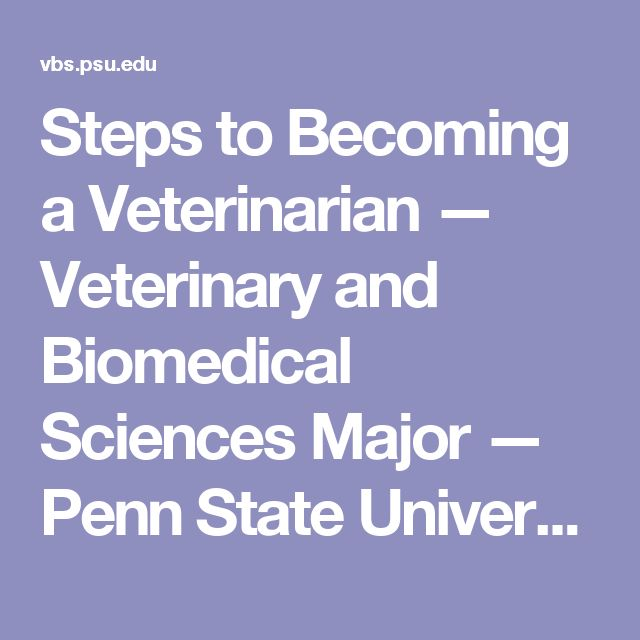 Steps to Becoming a Veterinarian — Veterinary and Biomedical Sciences Major — Penn State University