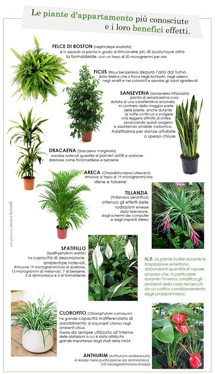 Oltre 25 fantastiche idee su piante da interno su for Piante da interno