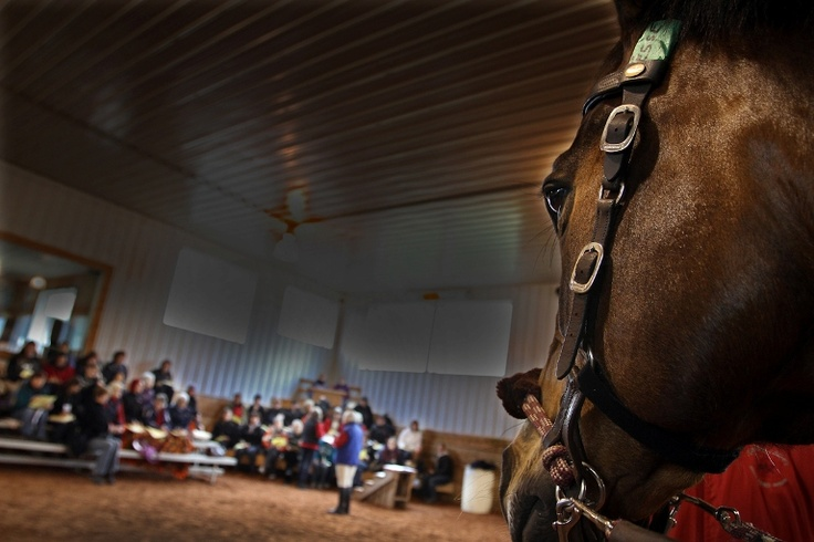 Horse's eye view! (Canadian Therapeutic Riding Association