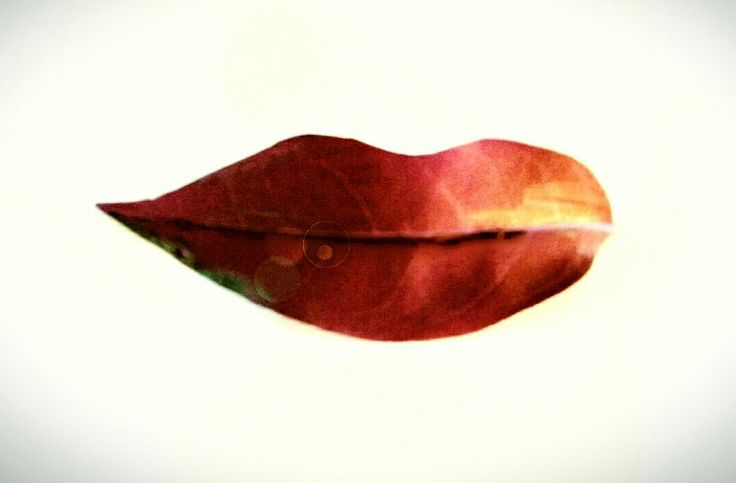 Leaf like lips