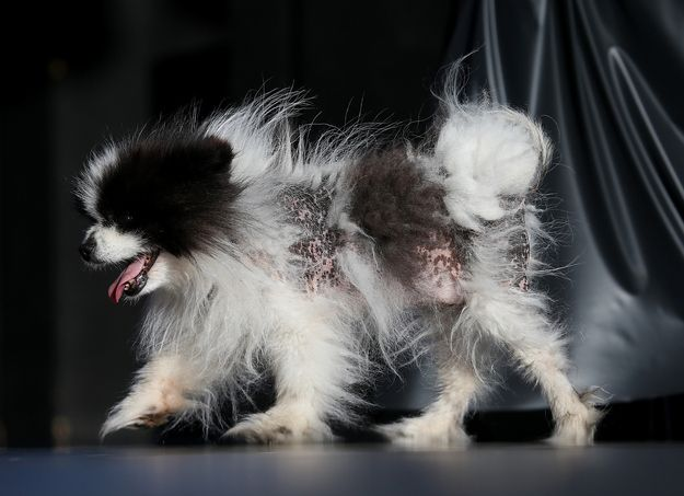 …Mayzie Brown… | Highlights From The 2013 World's Ugliest Dog Contest