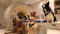 Πιερία: Οι σκύλοι επεξεργάζονται το νόημα και τους ήχους τ...