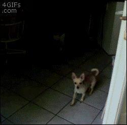 Este perro que pensó que la puerta estaba cerrada, aunque otro perro literalmente ACABABA de pasar por allí: | 31 perros cuyo fracaso fue tan terrible que ganaron