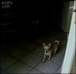 This dog who thinks theres