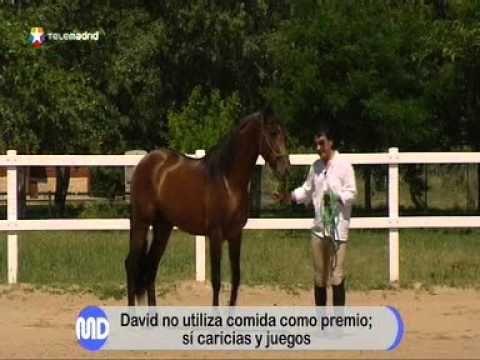 Cómo dominar a un caballo - YouTube