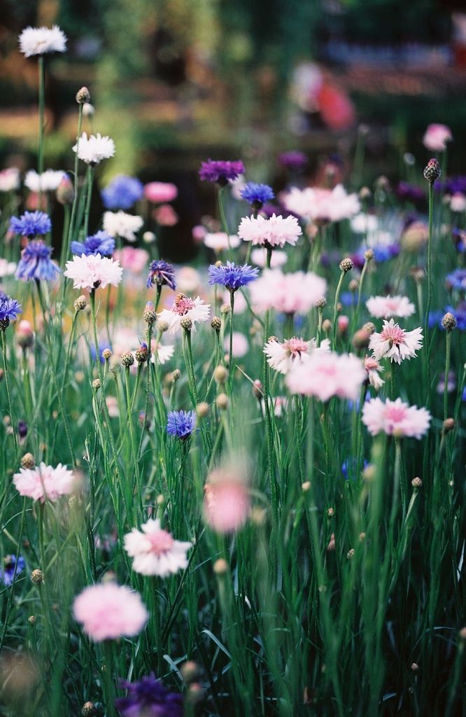 And as she walked away from you flowers bloomed after each of her steps.