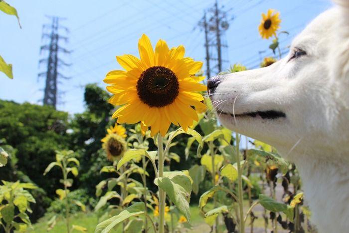 犬にリンゴのネットかぶせたら笑顔消えて草:ハムスター速報