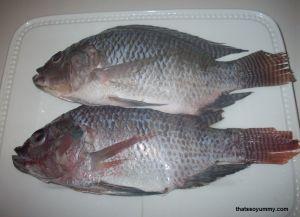 Dunia Cara Ternak Hewan - Peluang Usaha Sampingan: bisnis menggiurkan ternak ikan mujair