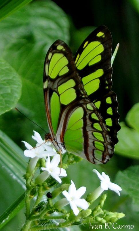 green & black butterfly