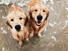 ☆ Follow us @popcherryau for more cute animals ☆