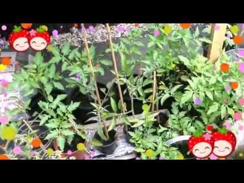 Update groenten en fruit (o.a. AH moestuintjes)