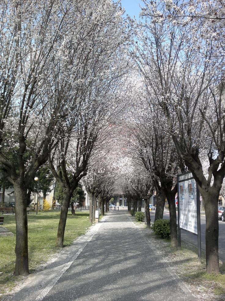 Spring in Tortona - Primavera a Tortona