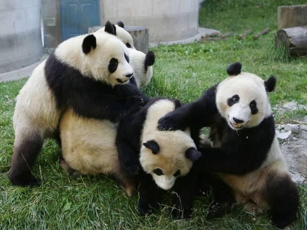 7 best Berlin Zoolischer Garten images on Pinterest   Berlin germany ...