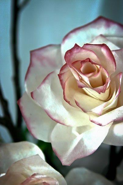 Utiliza filtros de café para hacer estas originales rosas de papel para decorar tu hogar...