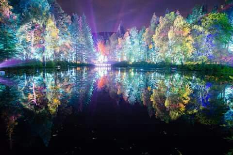 Enchanted forrest in Pitlochry Scotland