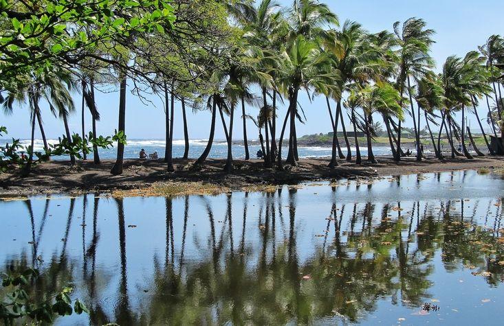 Coconut palms reflecting in pond behind Punalu'u Black Sand Beach