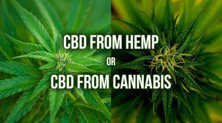 CBD from Hemp or CBD from Cannabis