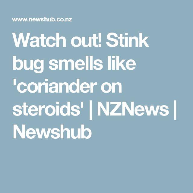 Watch out! Stink bug smells like 'coriander on steroids' | NZNews | Newshub