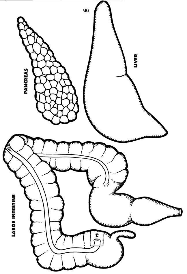 Aparato digestivo: páncreas.