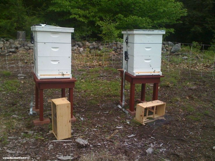 Bearproofing Your Beehives With A Bear Proof Electric