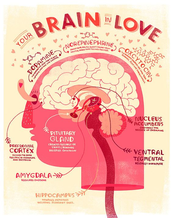 Valentine's Heart and Brain Anatomy Poster by Rachelignotofsky