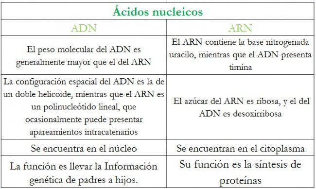 Diferencias Entre Adn Y Arn Cuadro Comparativo Adn Y Arn Molecula Del Adn Adn