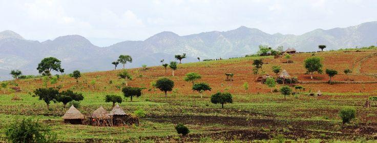 ethiopia-holidays-arbaminch-field.jpg (980×372)