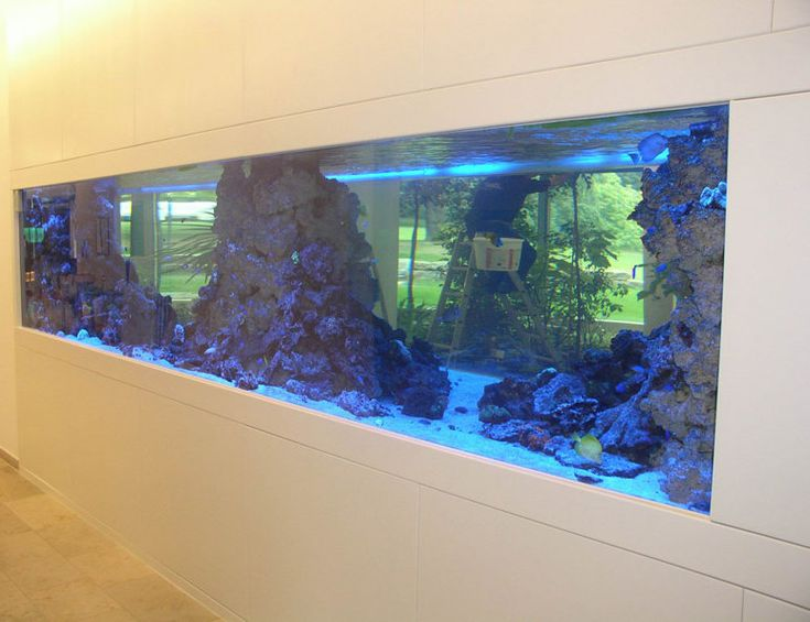 Die besten 25+ Aquarien Ideen auf Pinterest erstaunliche - deko fur aquarium selber machen