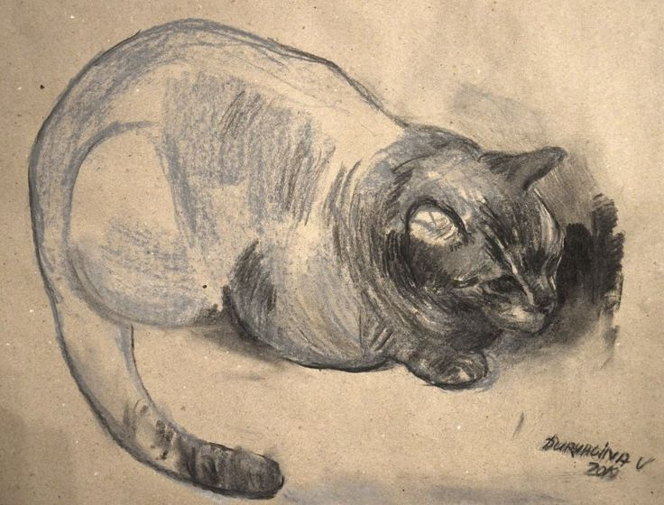 Cat charcoal drawing by Victoria Duryagina #cats #charcoal #drawing