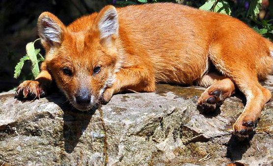 Prijzen - Safaripark Beekse Bergen. Afrika gevaarlijk dichtbij!