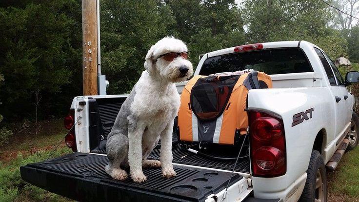 Cloverton the Deaf Dog