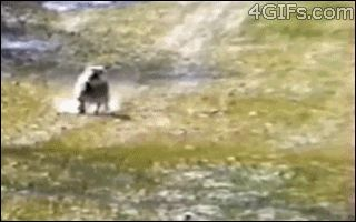 ATTACK/RETREAT.   The Best Cat Gif Post In The History Of Cat Gifs