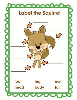 Scaredy Squirrel Literacy Pack  Half Price for Back to School!