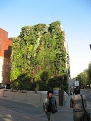 Vertical garden on a wall of the  Caixa Forum, a private museum of contemporary art and culture in Madrid.