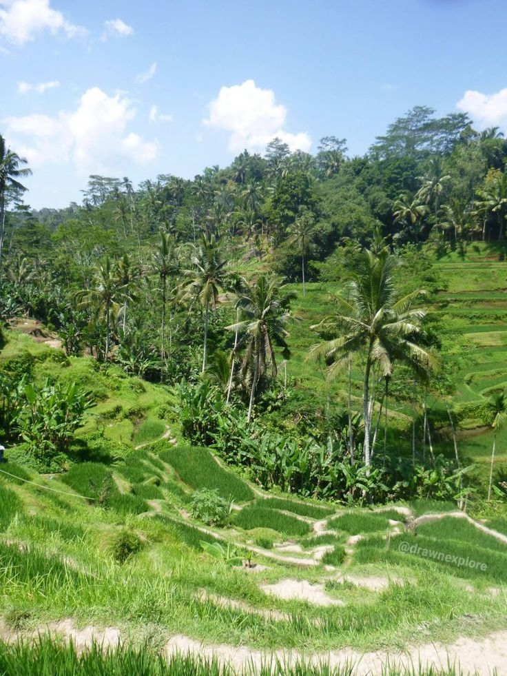 A tour of Ubud – Draw N Explore