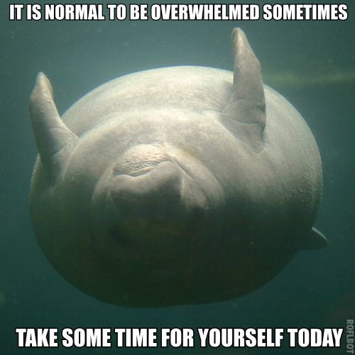 73 best manatees images on pinterest manatees animales for Best time to fish today